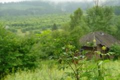 Вид на д.Гора